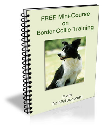Dogs  Border Collie  Free Training Course on Border Collies