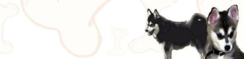 Alaskan Klee Kai image