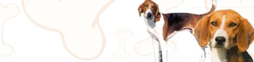 American Foxhound image