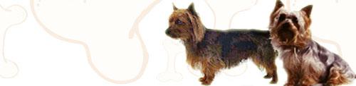 Australian Terrier image