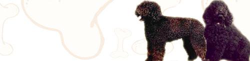 Barbet image