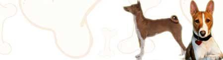 Basenji image