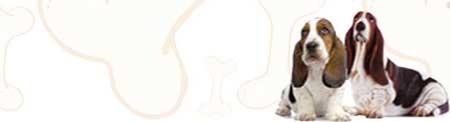 Basset Hound image
