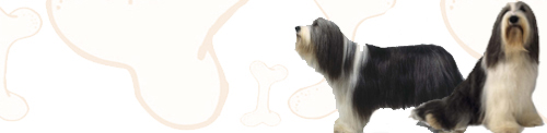 Bearded-Collie image