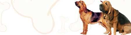Bloodhound image