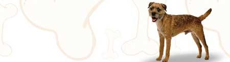Border Terrier image