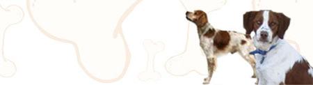Brittany Dog image