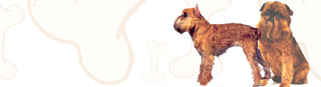 Brussels Griffon image