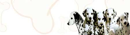Dalmatian image