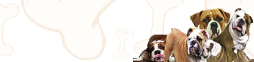 Olde English BullDogge image