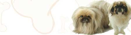 Pekingese image
