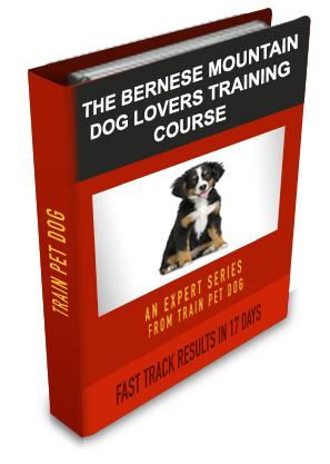Aggressive Bernese Mountain Dog How To Train Bernese