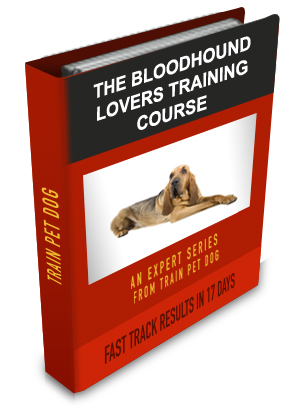 how to train a bloodhound