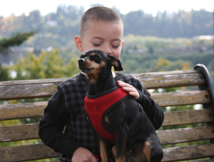 Miniature Pinscher Training Learn All About