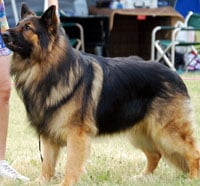 King Shepherd - Free Online Seminars and Free Training Course on King ...
